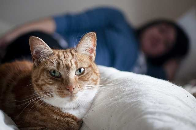 Health Risks Of Sharing Bed With Your Pet