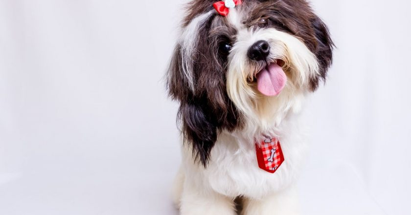 7 Dog Breeds Which Are Perfect for Your Kids Pet
